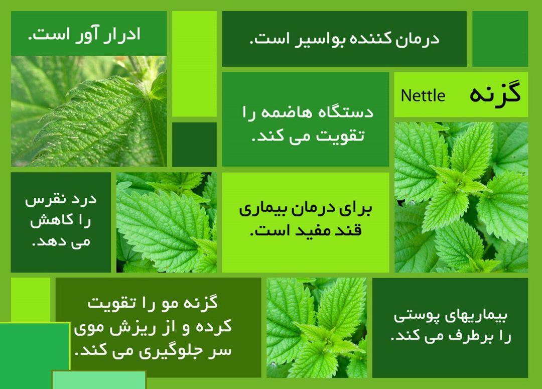 شگفتی خلقت در یک گیاه| پایان بواسیر/بیماری پوستی / ریزش مو و قند خون بالا
