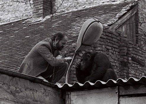 حرف زدن مدیر باغوحش بلگراد با شامپانزه فراری! +عکس