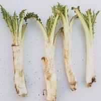 فصل رسوب زدایی/سم زدایی کبد و درمان کم خونی، واریس،آرتروز،روماتیسم با آمدن این سبزی رسید
