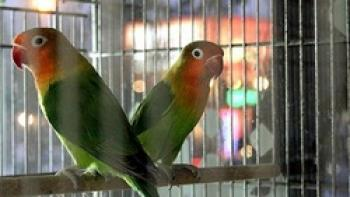 نگهداری پرندگان در خانه از نظر اسلام