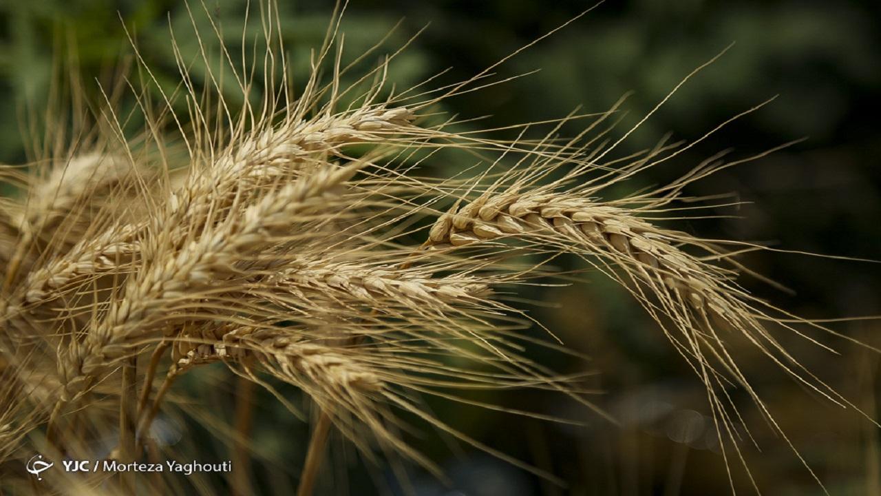در خواست کشاورزان؛ محاسبه قیمت محصولات کشاورزی بر مبنای ارز نیما