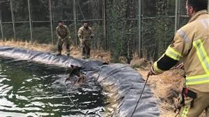 نجات دو گراز از غرق شدن در پارک سرخه حصار + عکس