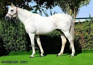 خسارت هفت میلیاردی جان دادن اسب قهرمان