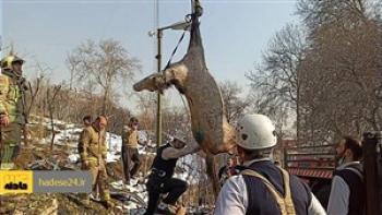 عملیات آتش نشانی برای نجات اسب از عمق ۸ متری چاه
