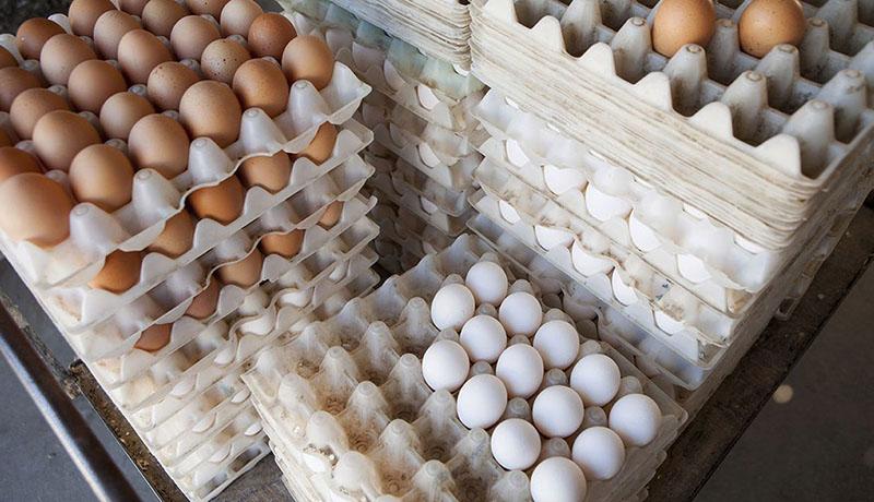 تخم مرغ شانهای ۴۸ هزار تومان شد / علت گرانی چیست؟