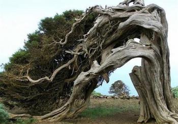 منظور از سجده درخت و ستاره در قرآن کریم