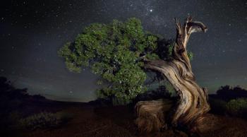 سجده درخت و ستاره در قرآن کریم نشاندهنده چیست؟