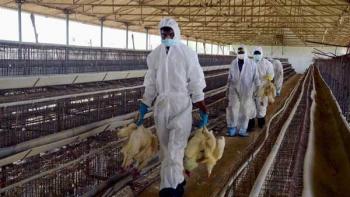 بروز آنفلوآنزای فوق حاد پرندگان در دشتآزادگان خوزستان