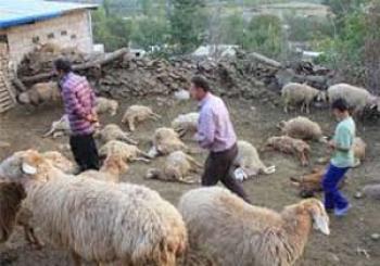 حیوانی ناشناخته عامل رعب و وحشت مردم کرمان شد