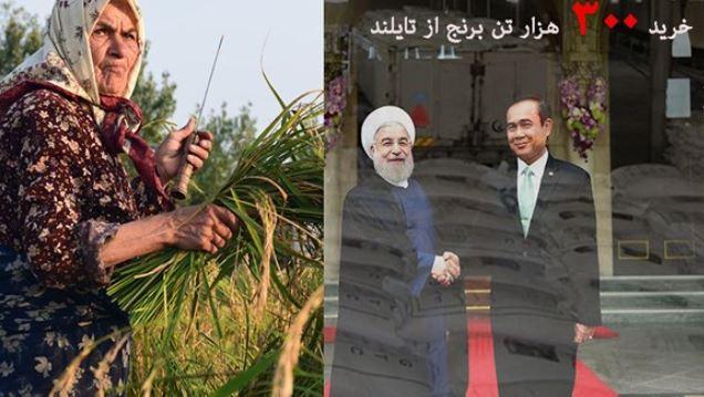 با این تصمیم برنج ایرانی را کِرمها باید بخورند! +فیلم