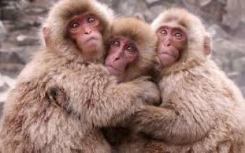 میمونهای یاغی در خیابانهای تهران!