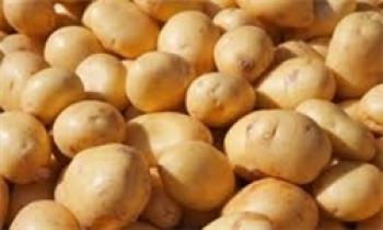 ایران ۵ هزار تن سیبزمینی از هند خرید