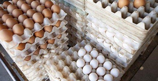 چگونه از آلودگی تخم مرغ جلوگیری کنیم
