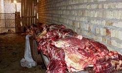 کشف گوشت گراز و خرس از مغازههای تهران!