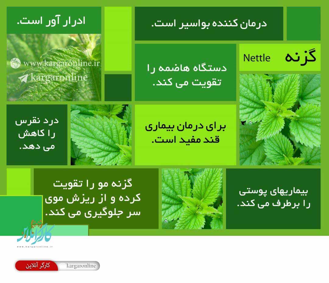 گیاهی که ۱۲ مرض را در شما یکجا درمان می کند