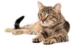 ثبت سفارش واردات «خاک برای خواب گربه» با دلار ۴۲۰۰ تومانی!