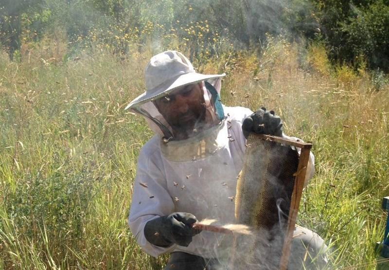 با زنبورداری میلیونر شوید/سیر تا پیاز تولید عسل