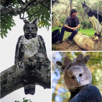 کشف عقاب قول پیکر زنده که اندازه یک انسان است+عکس