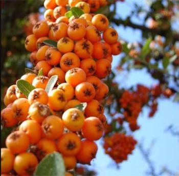 تا نوبرانه این میوه تمام نشده با آن مشکلات قلبی و فشار خون خود را برای همیشه درمان کنید+عکس