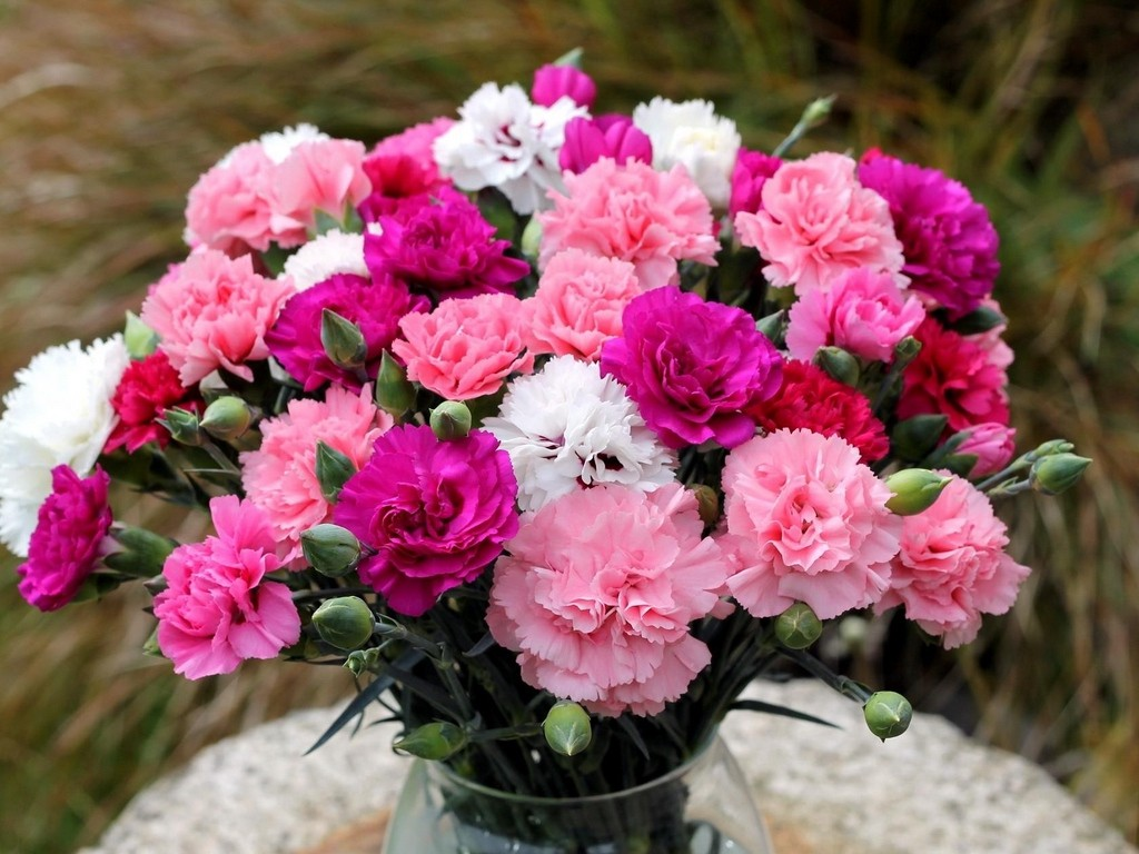 کنترل قند خون با گلی زیبا