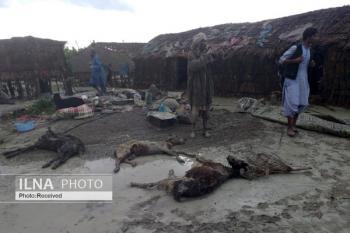 عکس/احشام تلف شده مردم در سیل بی سابقه سیستان و بلوچستان/ مردم: کمک های هلال احمر کافی نیست