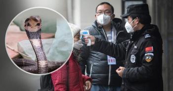 منبع احتمالی ویروس چینی کرونا اعلام شد