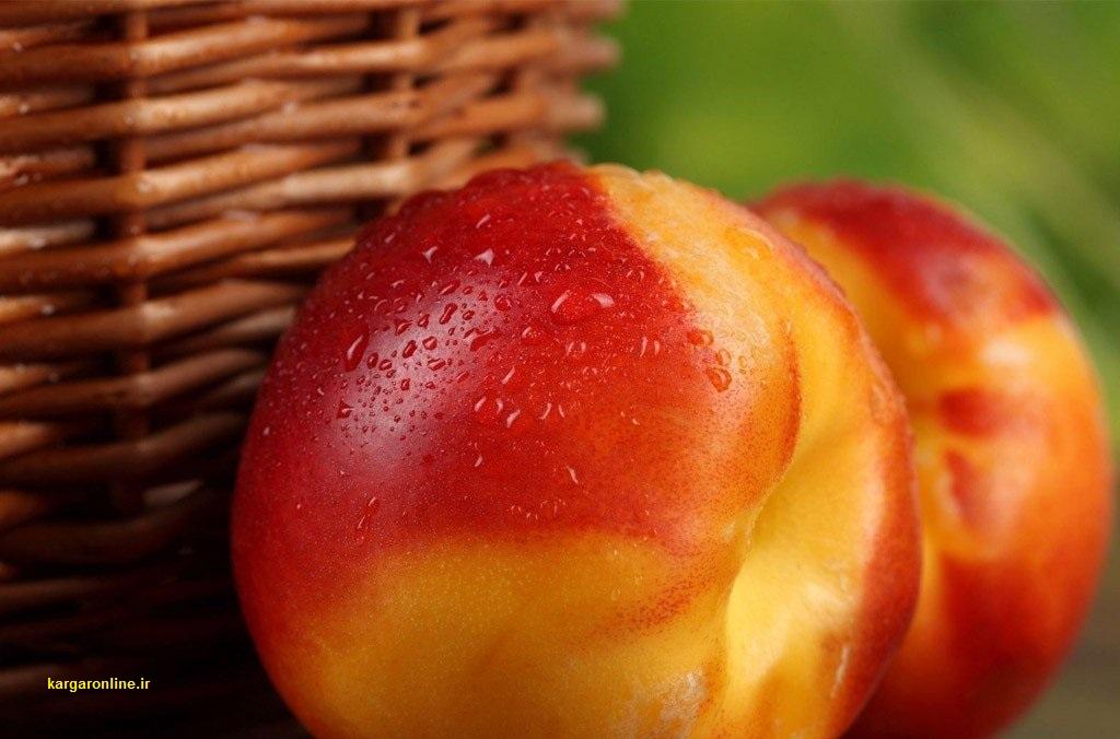خواص میوه خرداد/لاغری ، کاهش سریع وزن ، قند، فشار خون، دیابت