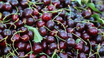 فصل گیاه مقوی اعصاب و درمان بی خوابی، نقرس، آرتروز، بهبود عضلات و تنظیم قند خون رسید