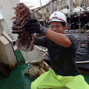 سوسک غولپیکری که در کف اقیانوس زندگی میکند +عکس
