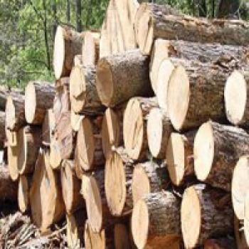 ۱.۵ تن چوب قاچاق در جنوب غرب پایتخت کشف شد
